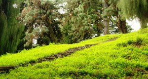 ბათუმის ბოტანიკურ ბაღის ბილეთის ფასი 8 ლარი ეღირება