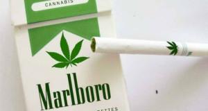 Philip Morris-მა ბრენდირებული მარიხუანას გაყიდვა დაიწყო