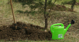 დიღმის ტყე-პარკში 600 წიწვოვანი ნერგი დაირგო