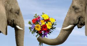 მსოფლიოს ყველაზე ძვირადღირებული ყვავილები