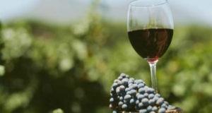 ღვინის ექსპორტი იანვარ-აპრილში, გასული წლის ანალოგიურ მონაცემებს 45%-ით აღემატება