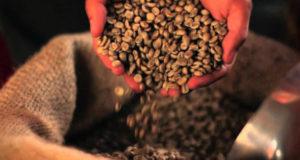 კახეთის გზატკეცილზე ყავის გადამამუშავებელ საწარმოს მშენებლობაში 11 277 000 ლარის ინვესტიცია ჩაიდება