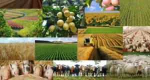 """,,სოფლის ახალი სიცოცხლე"""" - პროექტები რომლებმაც სოფლის მეურნეობის რეალურ განვითარებას უნდა შეუწყოს ხელი"""