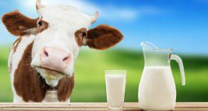 რძის პროდუქტების ბაზარზე ეტიკეტირების წესი ირღვევა