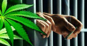 მარიხუანასთან დაკავშირებულ ზოგიერთ დანაშაულზე პასუხისმგებლობა პატიმრობის ნაცვლად, საზოგადოებისთვის სასარგებლო შრომით იცვლება
