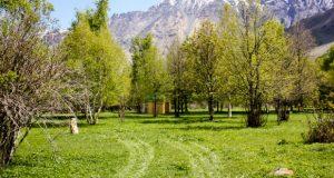 დარიალჰესის პროექტის ფარგლებში 200 ჰექტრამდე ტყე გაშენდება