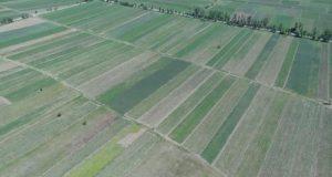 მიწის გაყიდვის აკრძალვის ინიციატივა – საფრთხეები და უპირატესობები