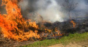 უნგრეთმა კომპანია Monsanto-ს გენმოდიფიცირებული სიმინდის მიწები გაანადგურა