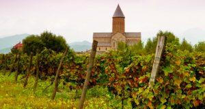 კახეთში 125 000 ტონამდე ყურძენი გადამუშავდა - მევენახეების შემოსავალმა 143 მილიონი ლარი შეადგინა