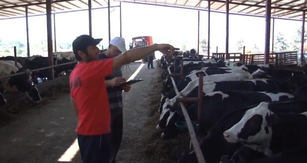 საქართველოში, სერთიფიცირებული პირველი ბიო ფერმა დაიწყებს ფუნქციონირებას