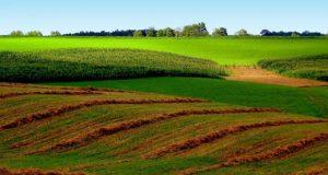 უცხოელთა მფლობელობაში არსებული მიწის 75% უქმად არის მიტოვებული