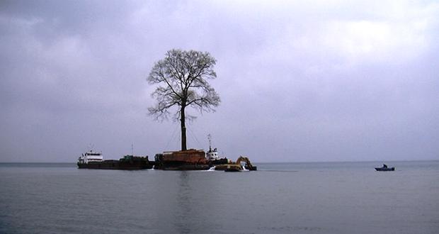 """აუქციონის პირობებით, """"დმანისის გადარჩენის ფონდი"""" ვალდებულია ნაყიდი ხე გადაიტანოს"""