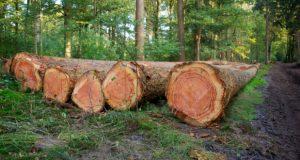 ბოლო 2 წელში ხე-ტყის უკანონო ჭრის შედეგად გარემოსთვის მიყენებული ზიანი 8 მლნ ლარით შეფასდა