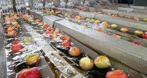 ქარელის მუნიციპალიტეტში ხილის გადამამუშავებელი ახალი საწარმო ამოქმედდა
