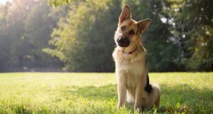 საფრანგეთში ძაღლებს ყეფა აუკრძალეს - კანონდამრღვევებს 68 ევროს გადახდა მოუწევთ