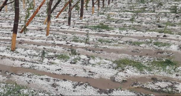 სამინისტრო შიდა ქართლში დაზარალებულ ფერმერებს ბანკებთან სესხების რესტრუქტურიზაციაზე უშუმდგომლებს