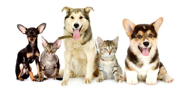 ვისაც ბინაში 5-ზე მეტი ცხოველი ეყოლება, დაჯარიმდება