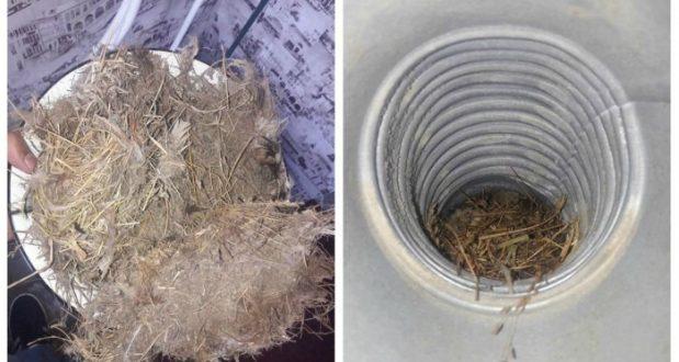 ჩიტის ბუდეების საფრთხე - გაზგამანაწილებელი კომპანია გაფრთხილებთ