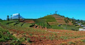ეკონომიკურ აქტივობაში მიწების ჩართვის პროცესი იგვიანებს