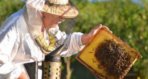 საქართველოში მეფუტკრეობას უდიდესი პოტენციალი აქვს - ევროკავშირში ქართული თაფლი უკვე დახლებზეა
